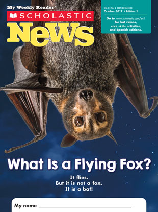 What Is A Flying Fox? - October 2017
